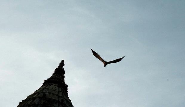 Vulture Sky
